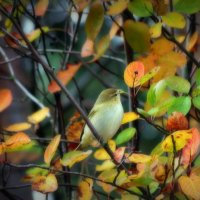 Птичка :: Михаил Цегалко
