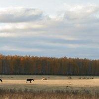 Осень, лошадки... :: Владимир Родионов