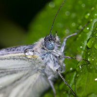 Макро бабочки :: Александр Синдерёв