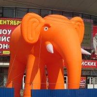 Рыжий слон :: Агриппина