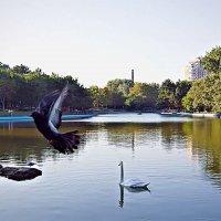 лебедь на пруду :: Александр Корчемный