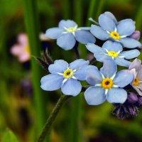 Мир цветов :: Роман Савоцкий