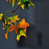Осенняя. :: Leonid Korenfeld