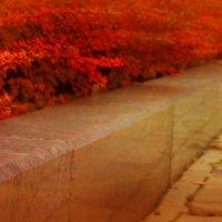 краски осени :: Evgenia Glazkova