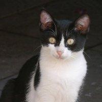 Ошалевший котик :: Дмитрий Лебедихин