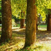 осень :: Михаил Святов