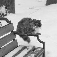 """""""Я, например, ничейный, сам по себе кот, свой собственный..."""" :: Александр Лебедевъ"""