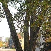 Старое дерево :: super-krokus.tur ( Наталья )