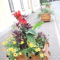 Парковые цветы :: Svetlana Lyaxovich