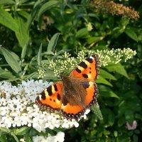 Последние бабочки уходящего тепла... :: Наталья Денисова
