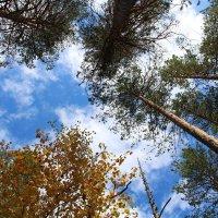 Какое небо голубое :: Roman PETROV
