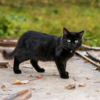 Бездомные коты Артём :: Сергей Бойко