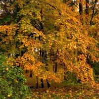 Золотые листья :: Сергей Карачин