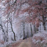 в лес сказочный опять пойду гулять :: Elena Wymann