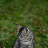 Кошка :: Dmitriy Lebedev