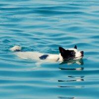 купание в Черном море :: Лиза Ворончихина
