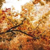 Наступила осень :: Blaga