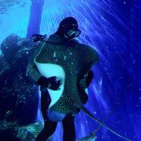 Танго со скатом. :: Виктор Никаноров