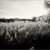 осенью трава расцвела :: Jiří Valiska