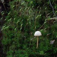 лес :: Лилия Winоgradowa