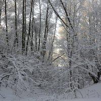 Зимнее утро :: Галина Антонова