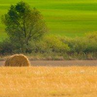Жёлто-зелёный пейзаж. :: Виктор Евстратов