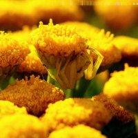 почти слился с жёлтым :: Александр Прокудин