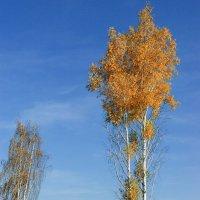 Осень на высоте :: Владимир Гришин