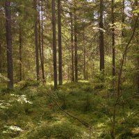 в лесу :: Андрей