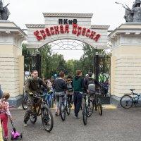 Велопарад :: Любовь Бутакова