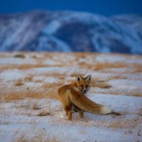 на ночную охоту :: Евгений Мазурин