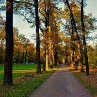 Закат на алее... :: Sergey Gordoff
