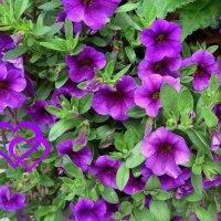Цветы :: Nina Yudicheva