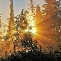 Встречаем солнце :: Сергей Чиняев