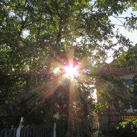 жаркий сентябрь :: mAri