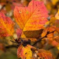 В ярких красках осени.... :: Екатерина Бильдер