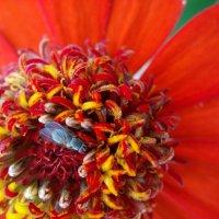На цветке :: Иван Клещин