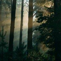 Рассвет в лесу :: Anna Sigida