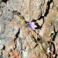 Цветок на фоне коры дерева. :: Михаил Столяров