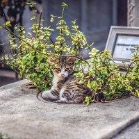 Житель старо-османского кладбища :: Ирина Лепнёва