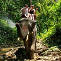 Прогулка на слонах :: Александр