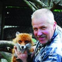 ... охотовед приручил лису :: Kostas Slivskis