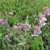 Полевые цветы :: Вера Щукина