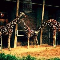 В зоопарке! :: Натали Пам