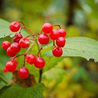 Осень :: Екатерина Гуща