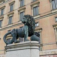 Бронзовый лев Королевского дворца  (северный вход) Стокгольм :: Swetlana V