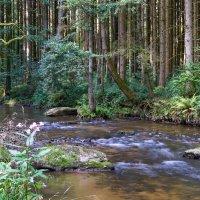 Лесной ручей :: Е. Вегнер