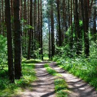 В летнем лесу :: Милешкин Владимир Алексеевич