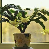 Жёлтый кактус :: Nikolay Monahov