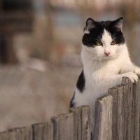 сними,сними,меня ,фотограф :: леонид логинов